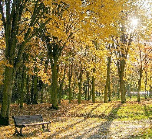 Syksyn kellastamat puut ja puistonpenkki ilta-auringon valossa.