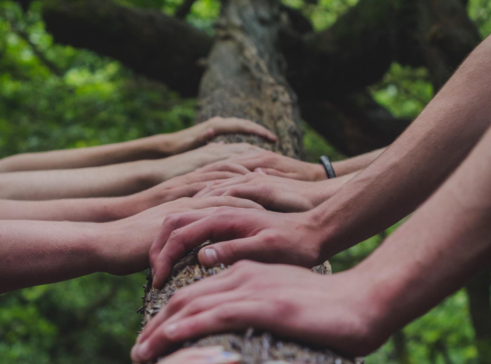 Käsiä vieretysten puun rungolla.