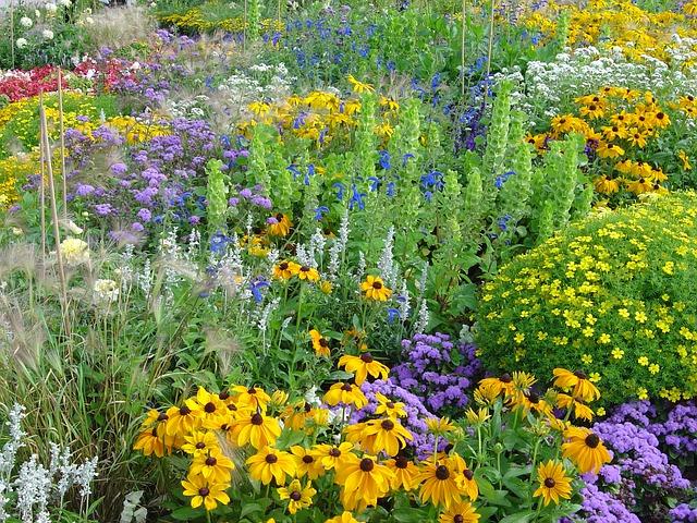 Paljon erilaisia ja erivärisiä kukkia niityllä.