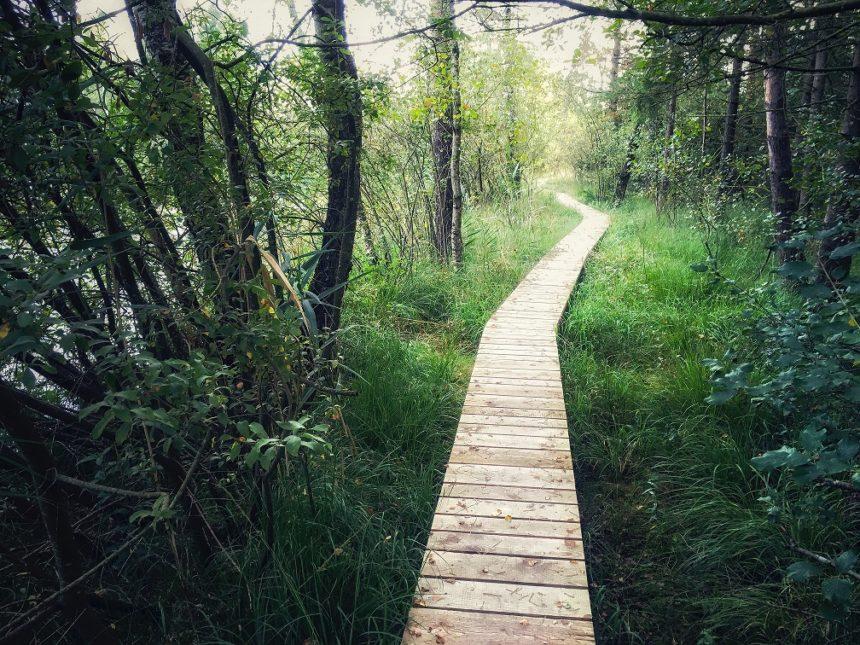 Pitkospuut johtavat metsän keskeltä veden äärelle.