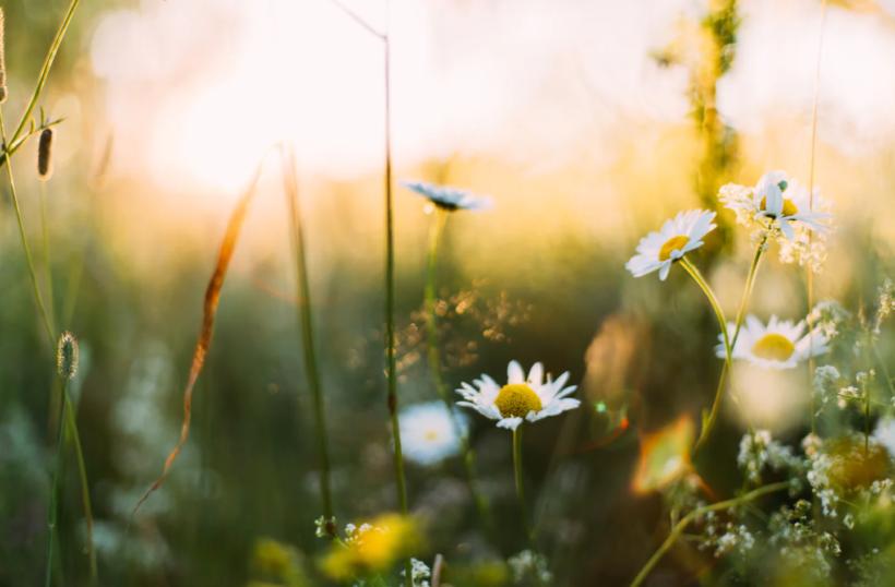 Kesäinen kukkaketo